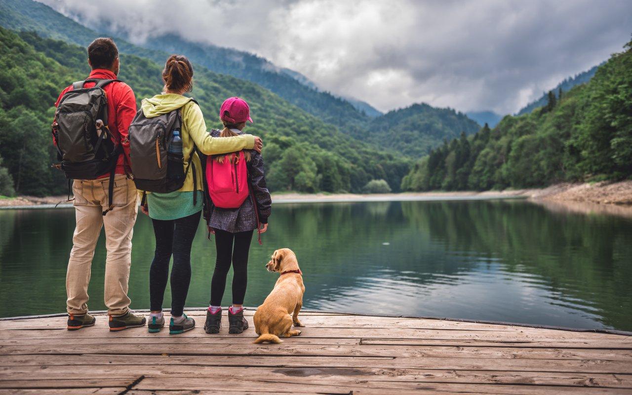 Dauphins ile de losinj - Vacances sur mesure croatie europe