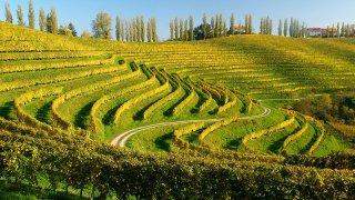 vignobles goriska brda - vacances famille slovenie terra balka
