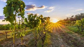 fun fact croatie atypique gastronomie vin viticulture- Terra Balka voyages Croatie