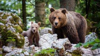 La faune des Balkans