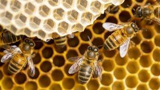 Les abeilles en Slovénie, au coeur de délicieuses et insolites traditions