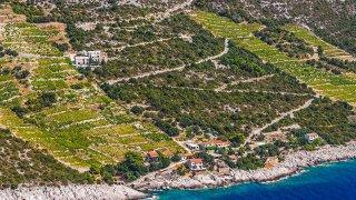 Peljesac dingac vignoble - vacances croatie terra balka