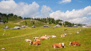 Velika planina - vacances sur mesure slovenie europe