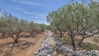 Huile d'olives Ile de Korcula - circuits sur mesure Croatie Europe