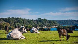 Croatie parc national de brijuni