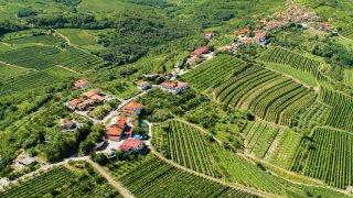 Goriska brda vignobles - circuits sur mesure Slovénie Europe