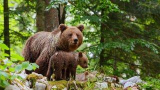 Grands espaces et faune sauvage de Slovénie