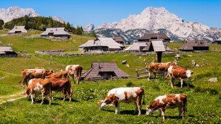 Les Alpes Juliennes