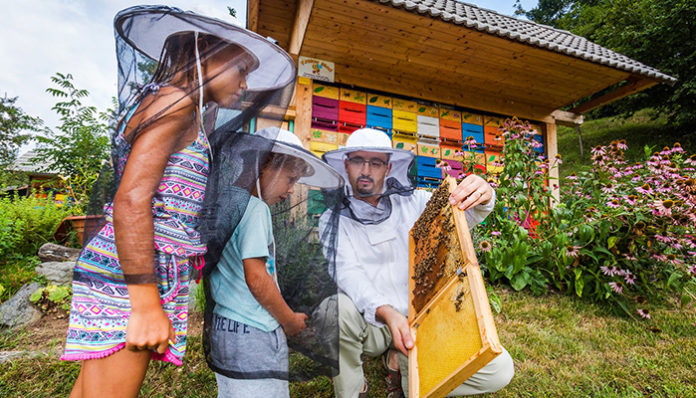 Observation Famille Apiculture - Slovénie Europe Terra Balka